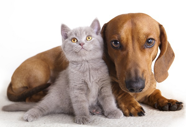 Pet Trusts: Providing for Man's Best Friend (and Cats, Too)